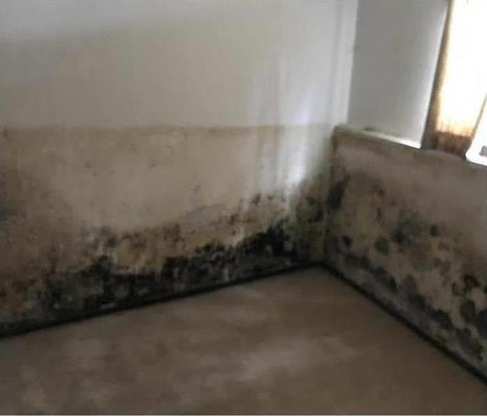 Mold in a Worcester Basement Before