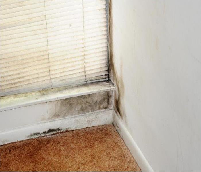 Mold Damage in a Worcester Home