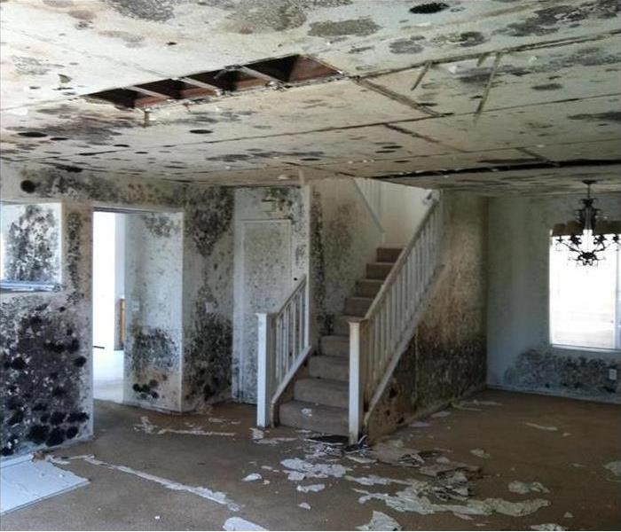 Investment House and Mold Damage