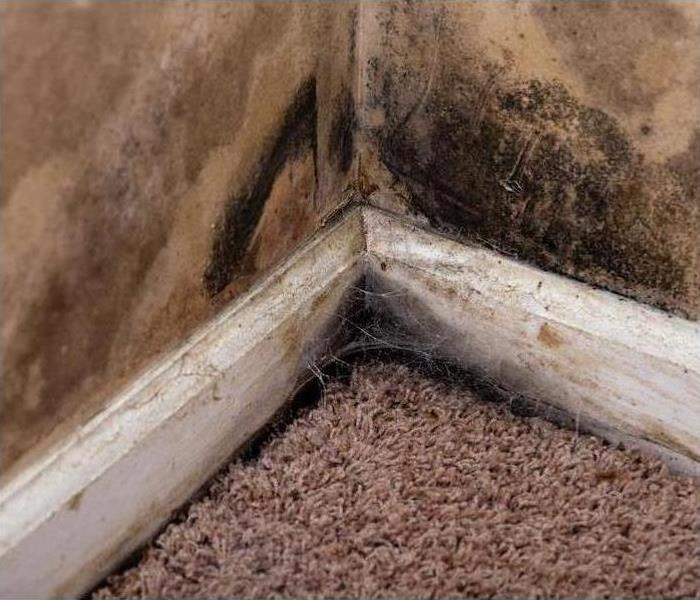 Mold Remediation Can You Save Your Best Carpet From Mold When It Gets Wet in Cherry Valley?