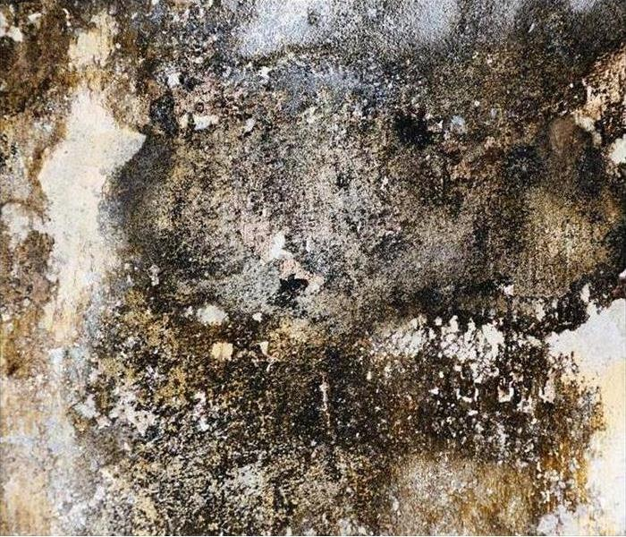 Mold Remediation Understanding the Dangers of Mold