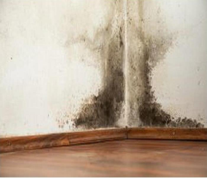 Mold Remediation Spring in Worcester means mold!