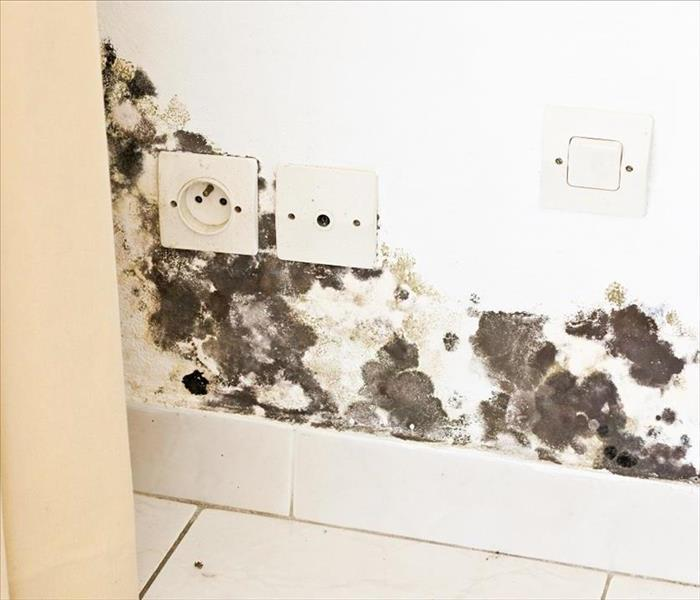 Mold Damage Control In Worcester